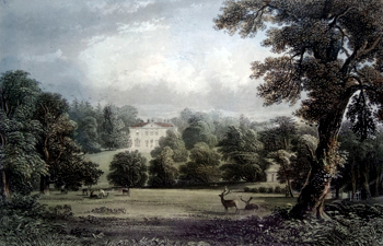 Antique print of  Surrey